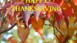 Happy Thanksgiving to all.
